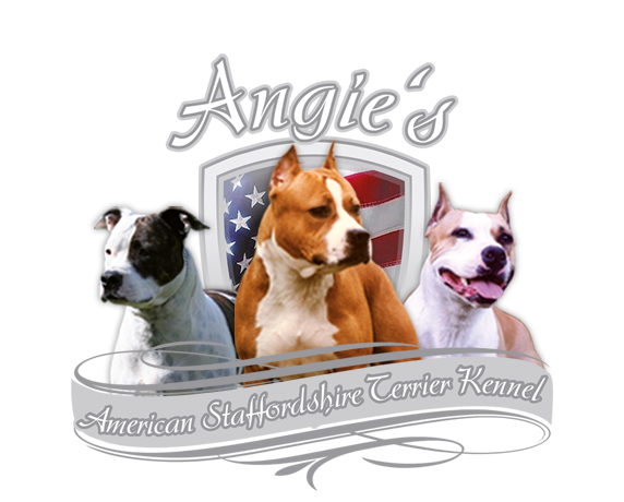 Angies Amstaff Kennel